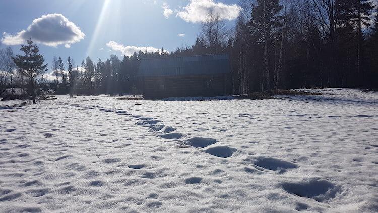 Elanden sporen in de sneeuw